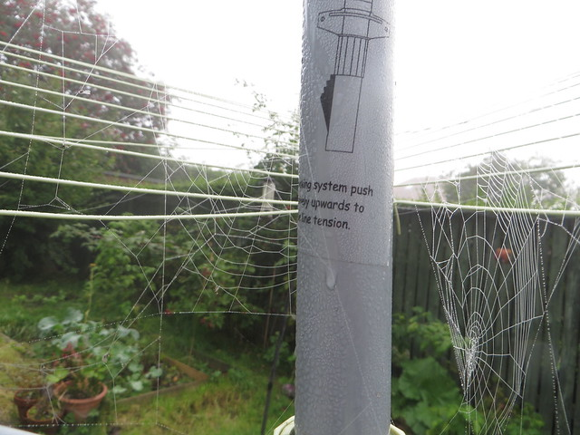 Autumn webs