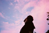 Is sky pink or light blue?
