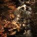 秋の渓流 - Autumn mountain stream.