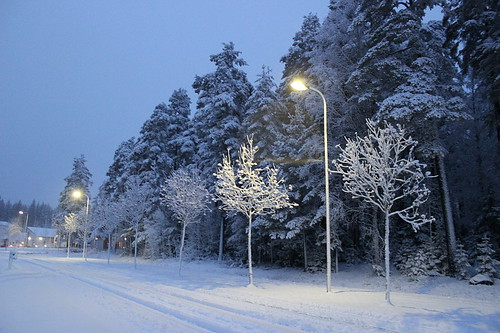 Snow 13_12_2014_5