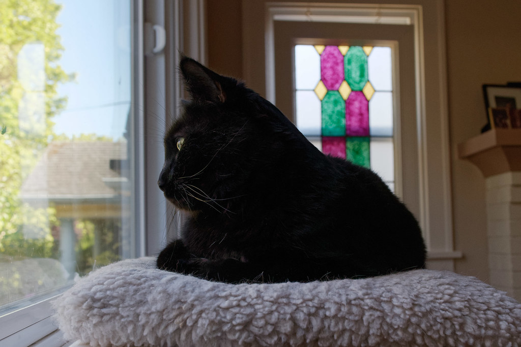 Our black cat Em looks out the picture window from the window seat