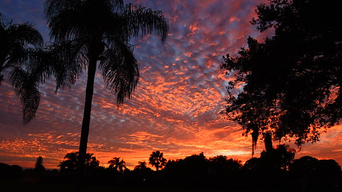 pink blue sunset red wallpaper sky orange color tree weather silhouette yellow clouds palms landscape evening nikon flickr purple sundown florida dusk coolpix bradenton p510 mullhaupt cloudsstormssunsetssunrises jimmullhaupt