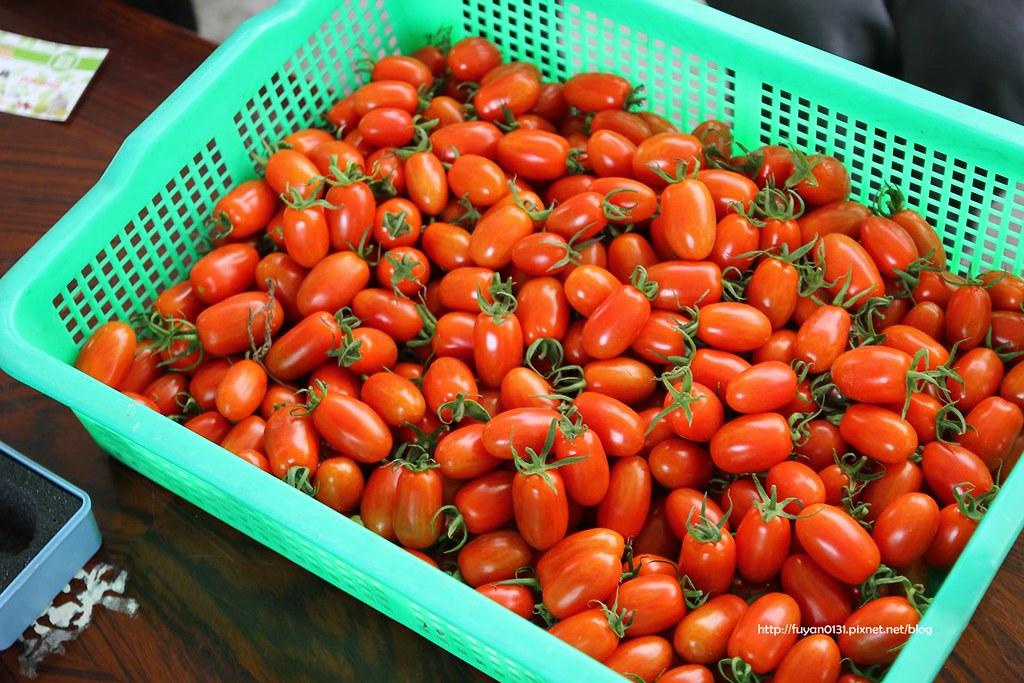 番茄 (8)