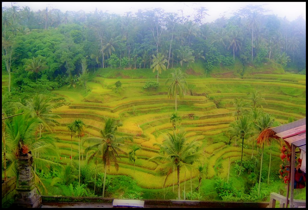 Bali Terraces by BeFunky.com