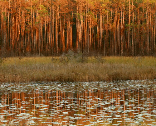 sunset reflection lana nature water grass pine catchycolors landscape louisiana lily pines pads nationalwildliferefuge finalist lacombe nwr savana gramlich canoneos5d sttammanyparish bigbranchmarsh dailynaturetnc14 nov232014