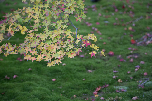 Arashiyama kyoto Autumn leaves 宝厳院と嵐山の紅葉