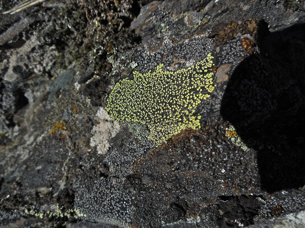 Green map ~ Rhizocarpon geographicum?