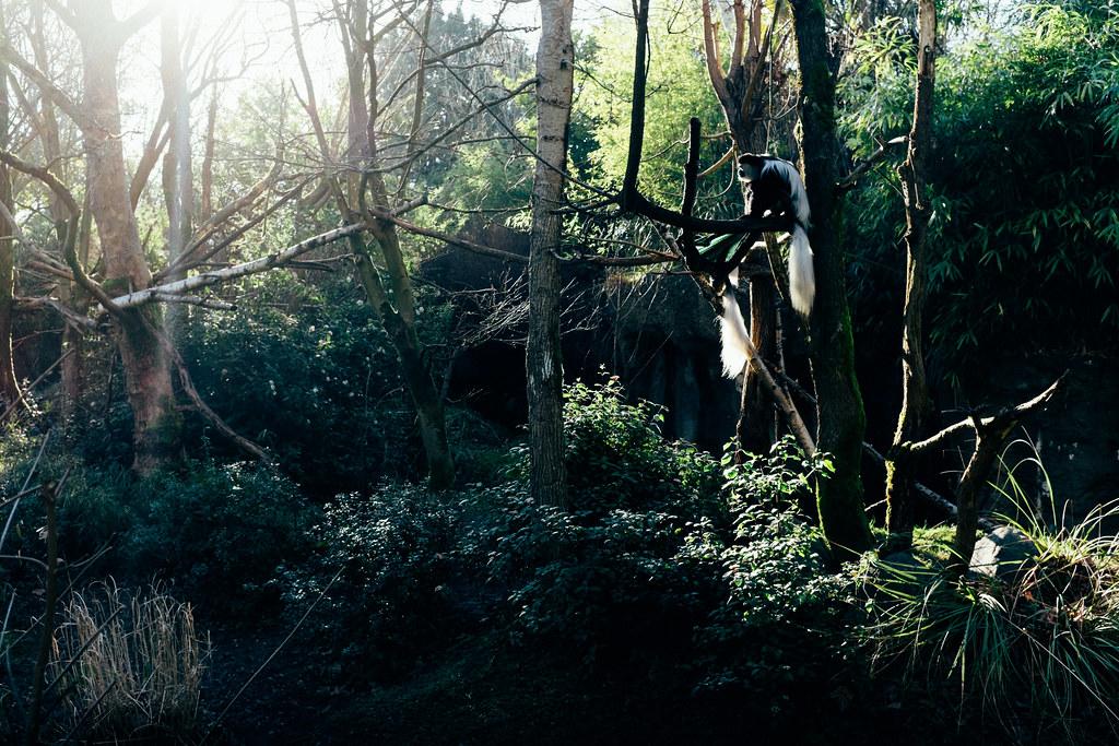 Woodland Park Zoo 05