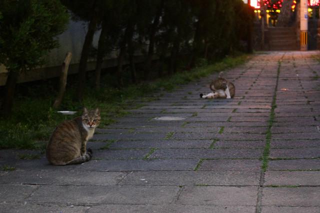 2014-05-06_02829_九州登山旅行.jpg