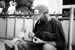 Street Doves