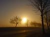 trees in golden light P1018867