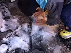 残雪で遊ぶとらちゃん 2015/1