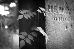 Camperdown Cemetery - life & death