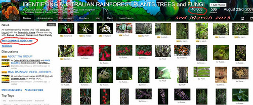 46,000 Images, 3rd March 2015 - IDENTIFYING AUSTRALIAN RAINFOREST PLANTS,TREES and FUNGI Flickr Group