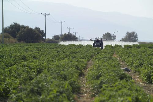 約旦河西岸地區的農藥噴灑。(來源:荷姆霍茲環境研究中心)