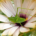 grasshopper by 1crzqbn