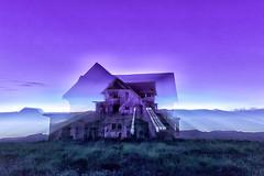Purple_lr