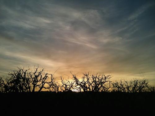 winter sunset sky sun tree sunrise landscape sentmenat