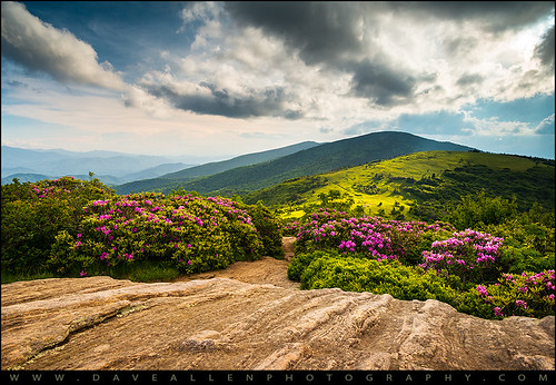 northcarolina appalachiantrail roan blueridgemountains nc spring flowers hiking roanmountain appalachians tennessee tn easttn outdoors nature landscape daveallen outdoorphotographer springflowers rhododendron