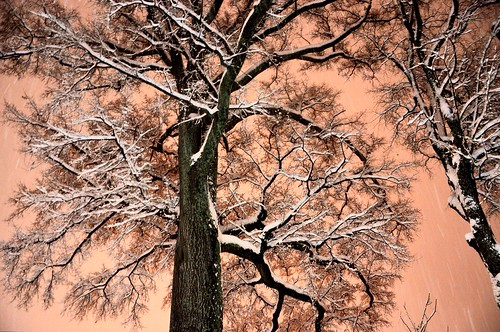 trees winter white snow chattanooga beautiful flickr glow tennessee blizzard warmtones coldasice bluffviewartdistrict salmonsky