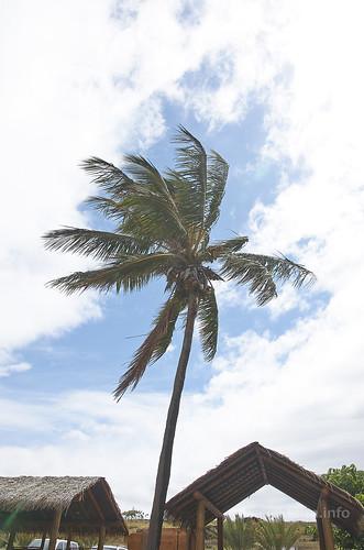 【写真】2015 世界一周 : アナケナビーチ/2021-04-05/PICT8646