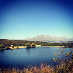 Só uvas #uvas #grapes #vinho #wine #stellenbosch #southafrica 🍷🍷🍷