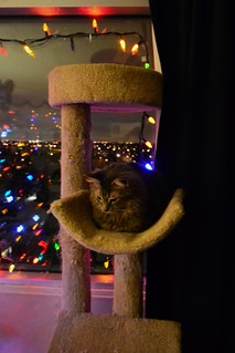 Jack Enjoys Christmas Morning from the Cat Tree