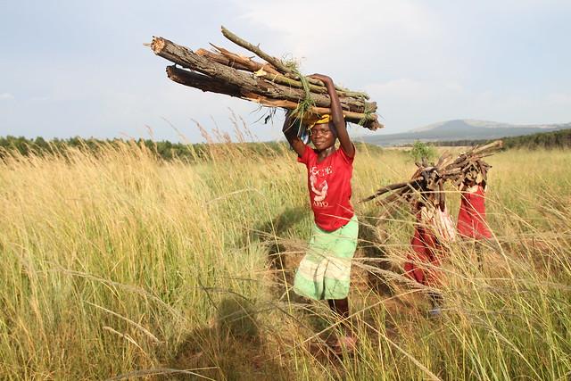 Deforestation pic B- Mwenezi girl