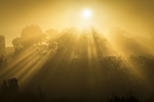 sunset sun mist inspiration tree nature yellow fog sunrise canon photography photo peace photographer power god zen t3i 55250mm mecelis