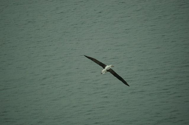 Look at that wingspan!