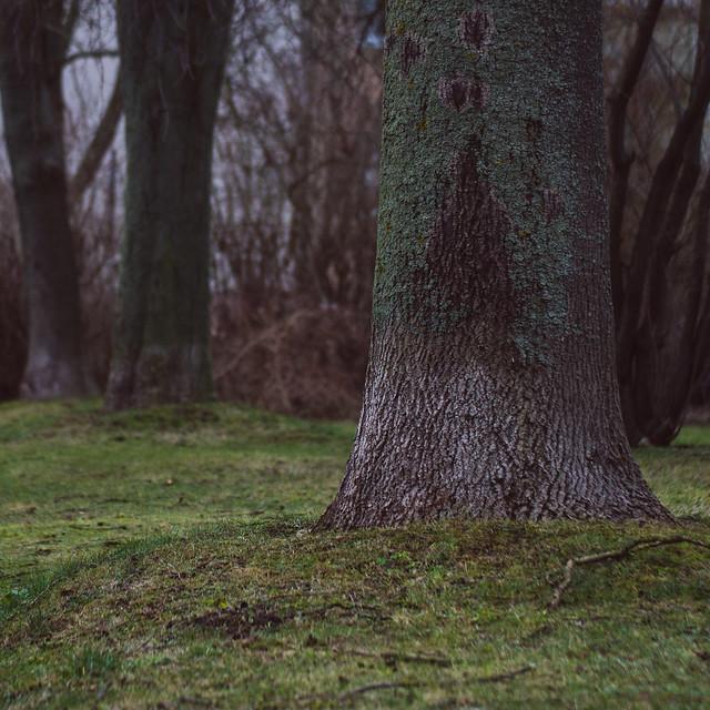 [314] Tree