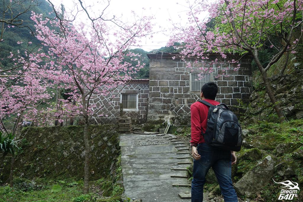 意外闖進淡水「現代桃花源」-粉紅櫻花包圍的石頭古厝,主人把每一位旅人當作客人盛情款待