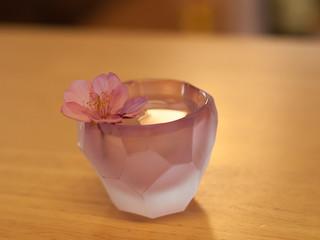 桜SAKURA_2287745