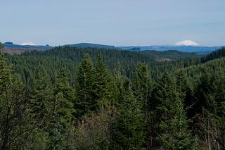 Fields Of Trees