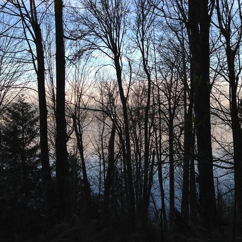 blue trees sky lake water fog lakewashington stedwardstatepark