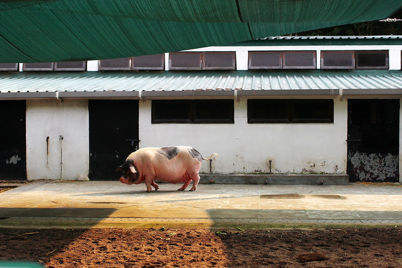 Kadoorie Farm, Hong Kong