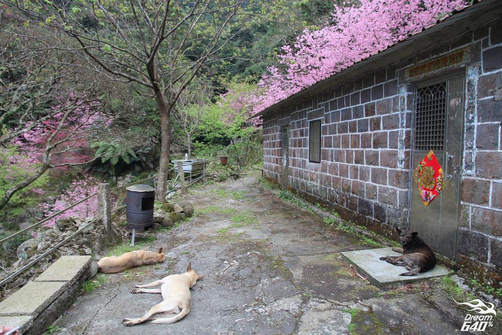 2015楓樹湖走進桃花源23