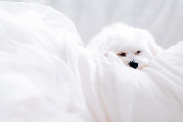 White wedding, style shoot, Multifolds, white dog
