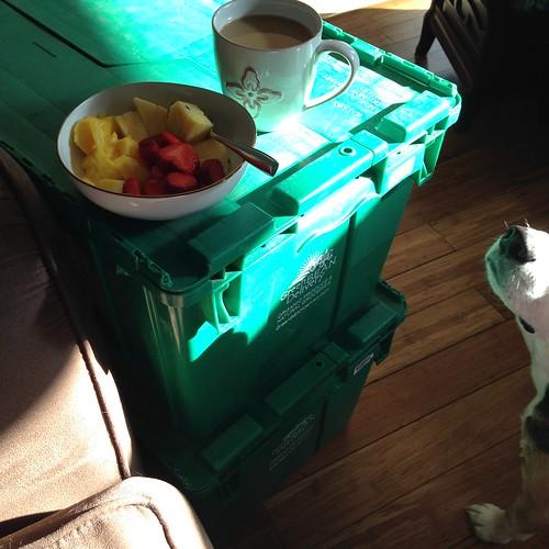 green bean bins