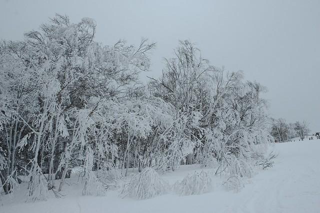 SAPPORO KOKUSAI ski area.