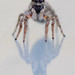 Jumping spider by joebrazil