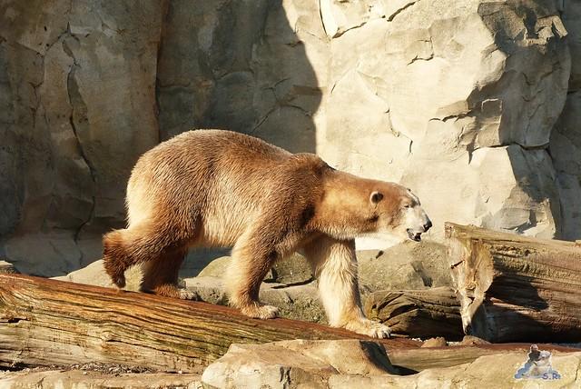 Zoo am Meer 08.03.2015  229