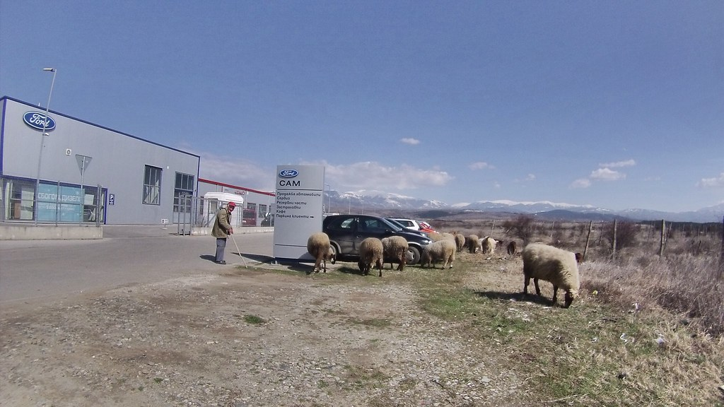 Farmer and sheeps at car garage - Bulgaria