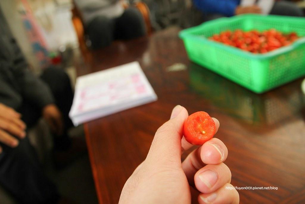 番茄 (4)