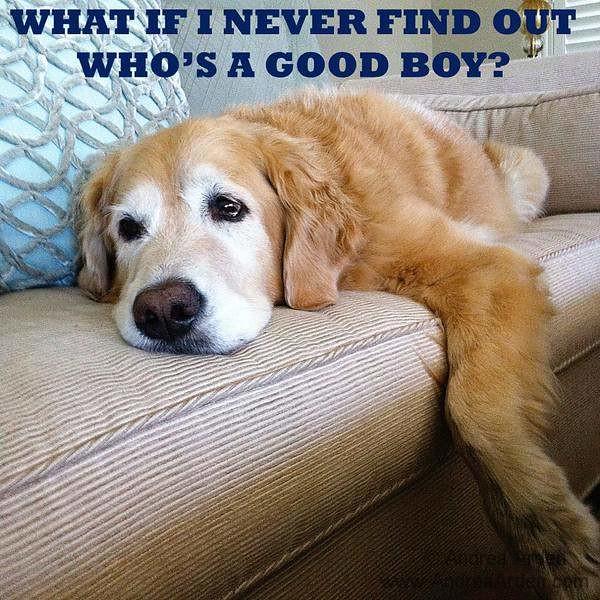 Rescue Dog Meme