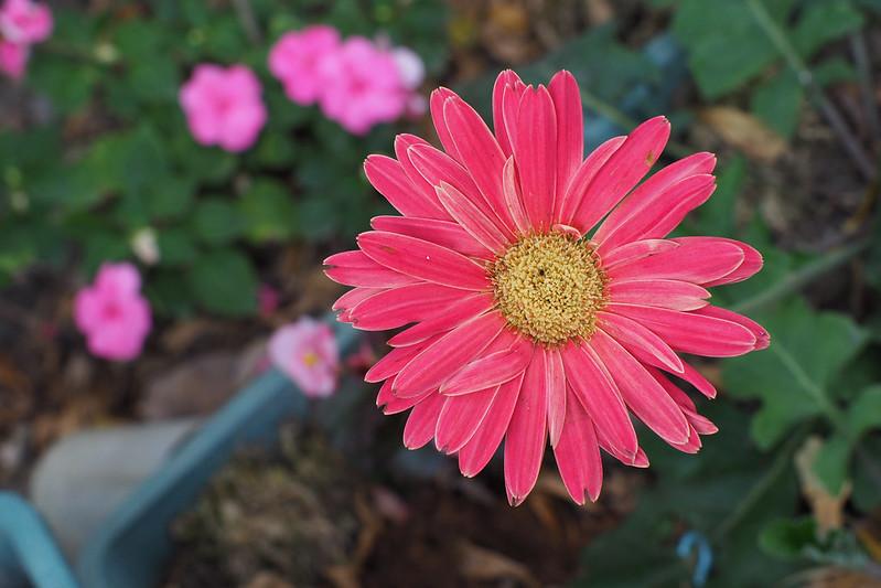 Flower|Taitung E-M5 Mark II