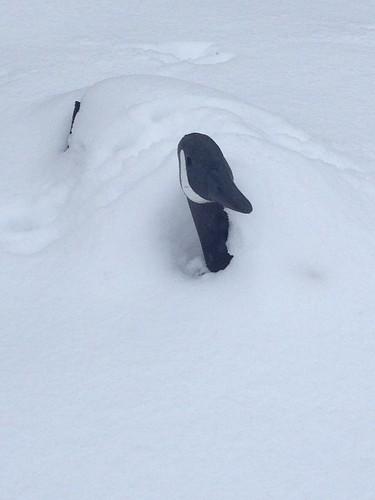 snow got your goose?