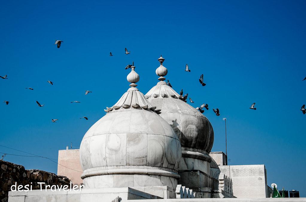Pigeons above Dargah in Mehrauli