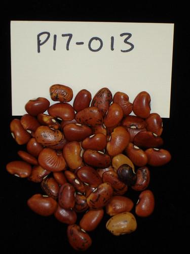 P17-013 Original S