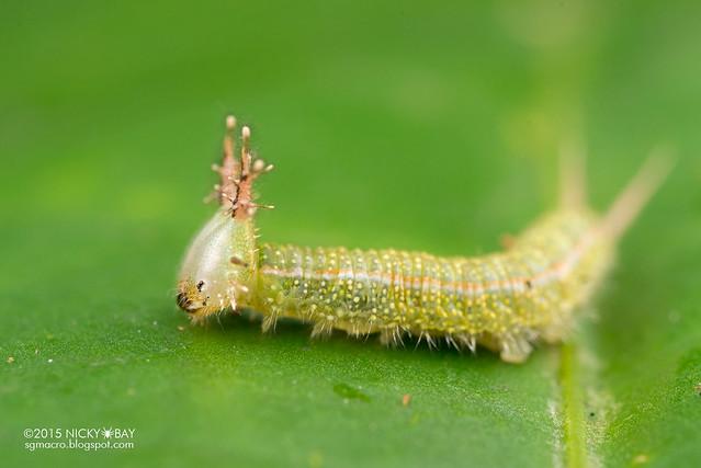 Caterpillar - DSC_4134